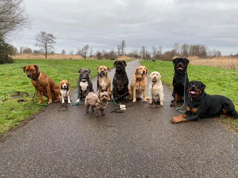 De Hondencoach omslag
