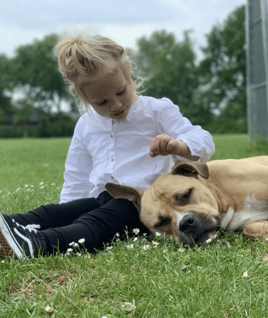 gedragsconsult de hondencoach