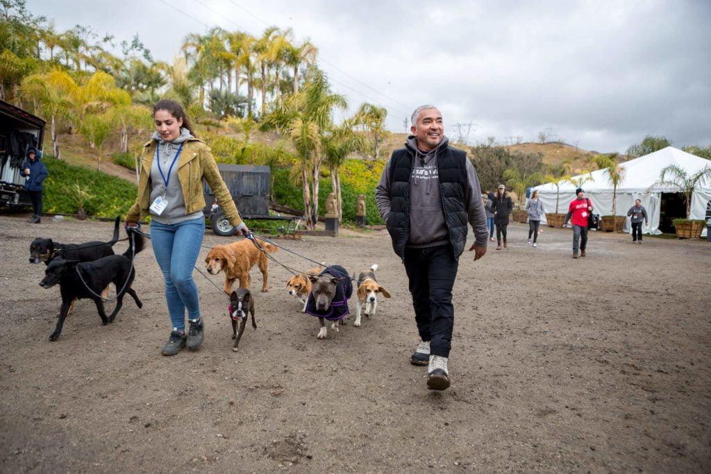 Ook hondentrainers moeten blijven bijtrainen: Fundamentals II (2018) @ The Dog Psychology Center, Santa Clarita, California