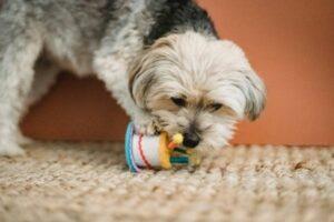 Puppy bijten