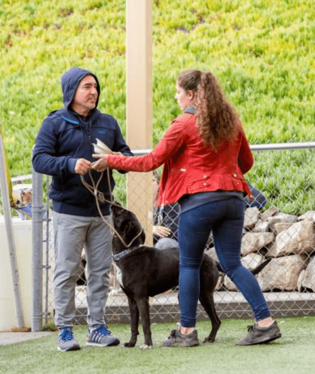 Hands-on instructies van hondengedragskundige Caesar Millan (Dog Behavior and Training pt. I, 2018)