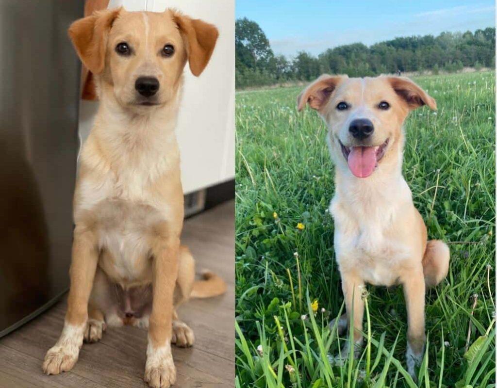 Bootcamp voor honden voor en na