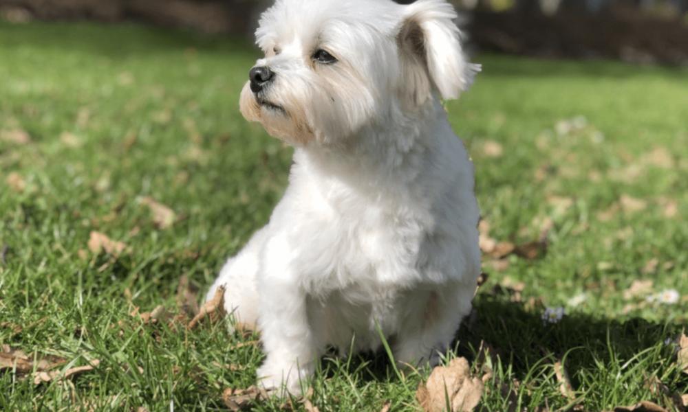 Puppy Training de hondencoach